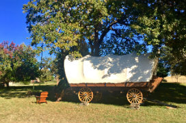 old fashioned covered wagon parked under tree